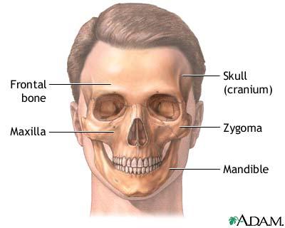 Craniofacial Reconstruction Seriesnormal Anatomy Medlineplus