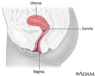Cervical dysplasia seriesnormal anatomy medlineplus medical normal anatomy ccuart Gallery