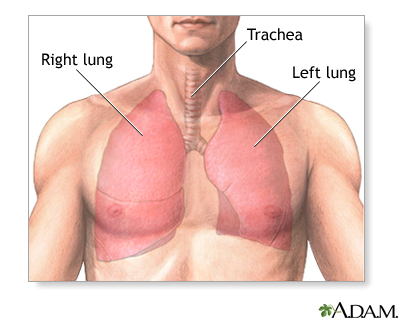 Pulmonary lobectomy - series—Normal anatomy: MedlinePlus Medical ...