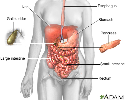 appendectomy: medlineplus medical encyclopedia, Cephalic Vein