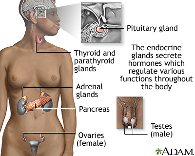 Endocrine glands: MedlinePlus Medical Encyclopedia Image