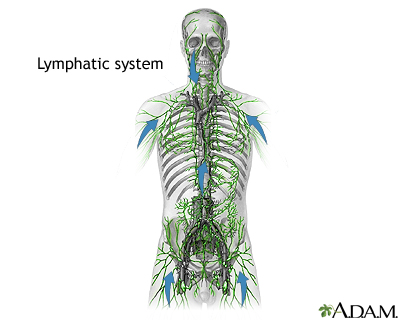 The Lymphatic System - MIND BODY SCIENCE