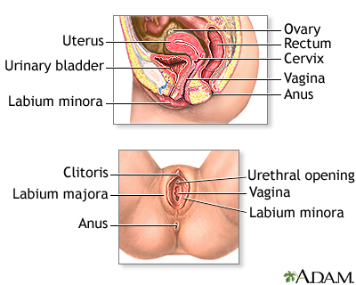 female reproductive anatomy: medlineplus medical encyclopedia image, Human Body