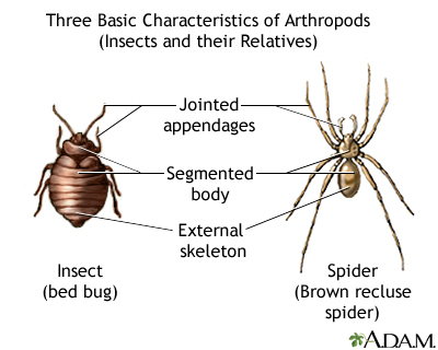 Arthropods - basic features