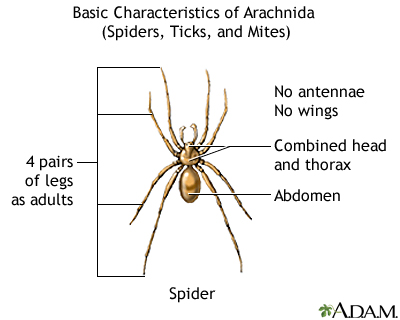Arachnids, basic features
