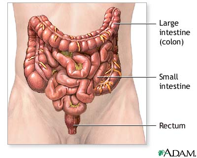 Colon cancer - Series—Normal anatomy: MedlinePlus Medical Encyclopedia