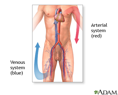 Venous thrombosis - series - Normal anatomy
