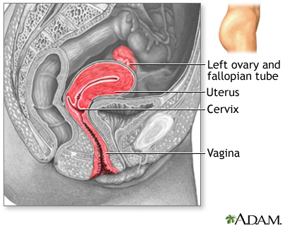 Side sectional view of female reproductive system