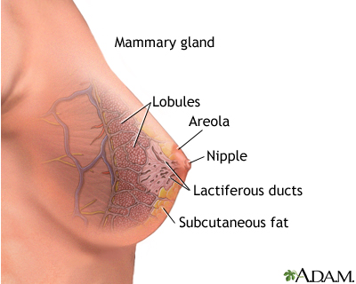 Mammary gland: MedlinePlus Medical Encyclopedia Image