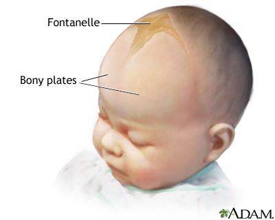 Baby Fontanelle Gestoßen