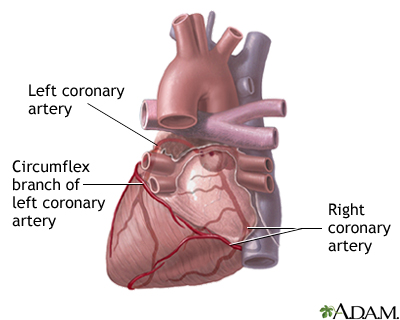 Posterior Heart Arteries Medlineplus Medical Encyclopedia Image