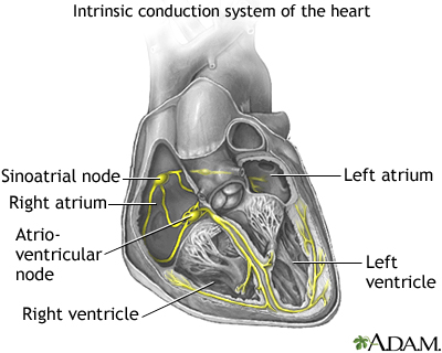 The intrinsic conduction system sets the basic rhythm of the beating heart by generating impulses which stimulate the heart to contract.