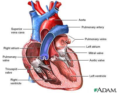 Detailed diagram of anterior heart introduction to electrical detailed diagram of anterior heart images gallery ccuart Image collections