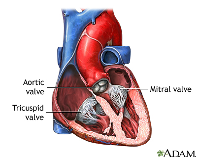 Heart valve surgery - series—Normal anatomy: MedlinePlus Medical ...