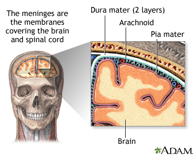 Image result for meninges