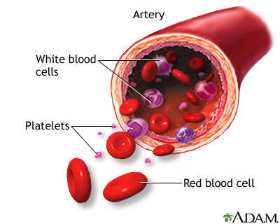 Formed elements of blood: MedlinePlus Medical Encyclopedia Image