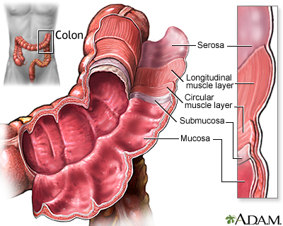 Structure Of The Colon Medlineplus Medical Encyclopedia Image