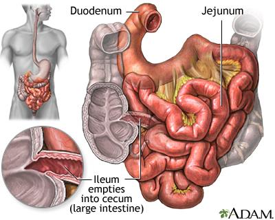 small intestine: medlineplus medical encyclopedia image, Human body