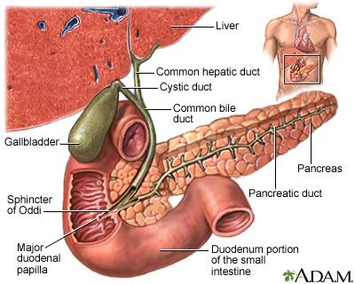 gallbladder: medlineplus medical encyclopedia image, Human body