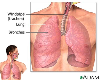 lower respiratory tract medlineplus medical encyclopedia image