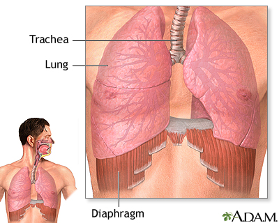 diaphragm and lungs: medlineplus medical encyclopedia image, Human Body