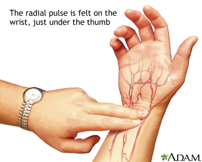 Image result for radial pulse