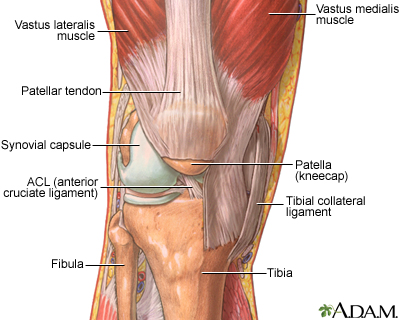 The structure of a joint medlineplus medical encyclopedia image overview ccuart Choice Image