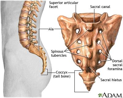 Sacrum Medlineplus Medical Encyclopedia Image