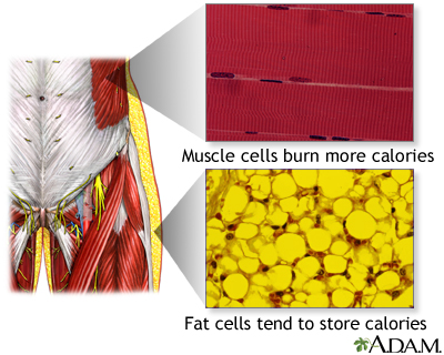 Muscle cells vs. fat cells: MedlinePlus Medical ...