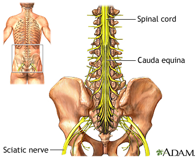 cauda equina: medlineplus medical encyclopedia image, Human Body