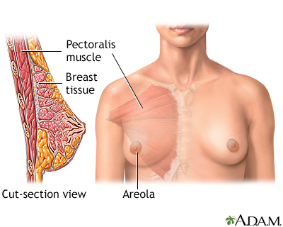 Breast Images Normal anatomy
