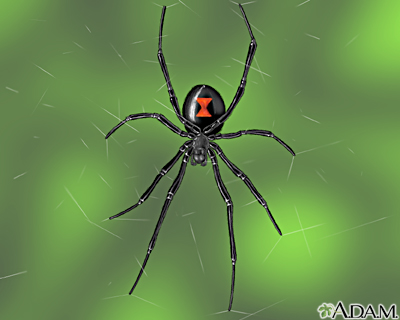 """The female black widow is easily recognized by her shiny black body and red hourglass marking underneath her round abdomen""