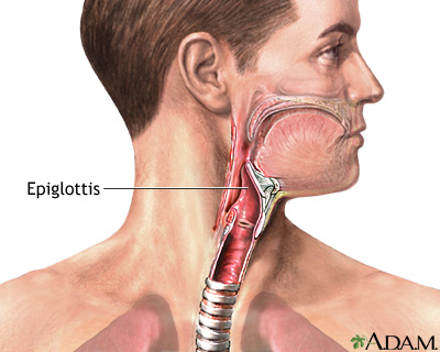 Epiglottis: MedlinePlus Medical Encyclopedia Image