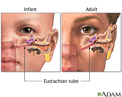 Eustachian tube: MedlinePlus Medical Encyclopedia Image