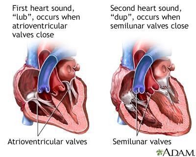 Heart Beat Medlineplus Medical Encyclopedia Image