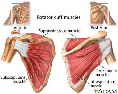 Rotator Cuff Muscles Medlineplus Medical Encyclopedia Image