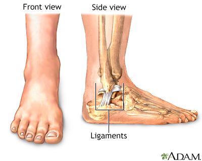 Muscles, tendons, and ligaments surround the ankle providing the stability