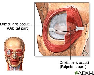 eye muscles: medlineplus medical encyclopedia image, Human body