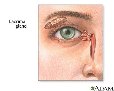 Lacrimal gland: MedlinePlus Medical Encyclopedia Image