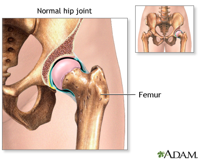 Normal hip joint anatomy