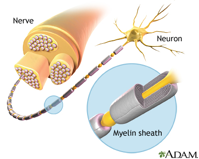 Myelin And Nerve Structure Medlineplus Medical