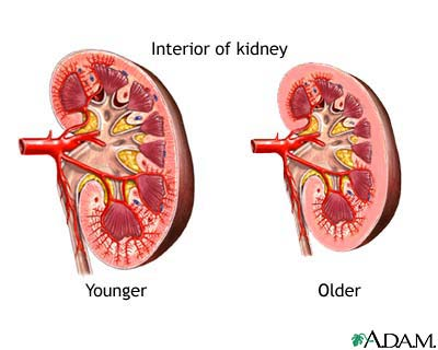Changes in kidney with age