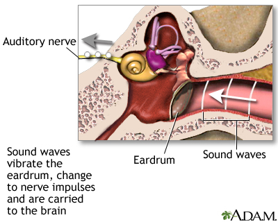 Sense of hearing: MedlinePlus Medical Encyclopedia Image