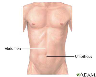 Normal external abdomen: MedlinePlus Medical Encyclopedia Image