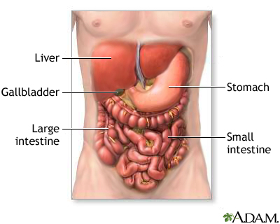 digestive system organs: medlineplus medical encyclopedia image, Human Body