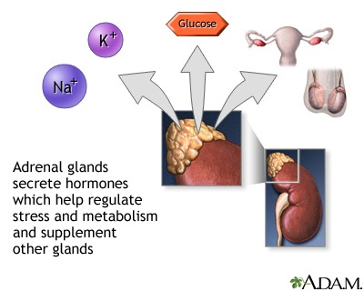 Adrenal Gland Hormone Secretion Medlineplus Medical Encyclopedia Image