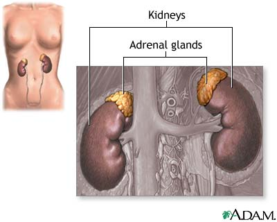 Adrenal glands: MedlinePlus Medical Encyclopedia Image