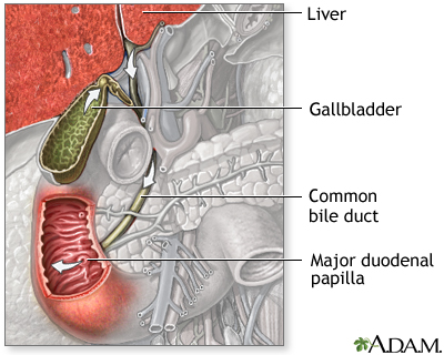 Bile pathway: MedlinePlus Medical Encyclopedia Image