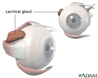 Lacrimal gland anatomy: MedlinePlus Medical Encyclopedia Image