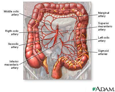 Blood Supply Of The Large Intestine Medlineplus Medical